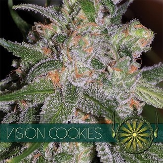 Vision Cookies (Vision Seeds) feminized