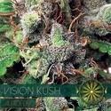 Vision Kush Autoflowering (Vision Seeds) feminized