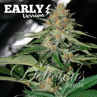 Delicious Candy Early Version (Delicious Seeds) feminized