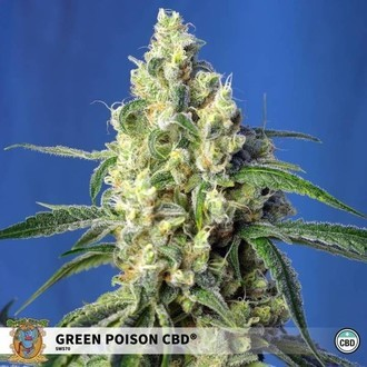 Green Poison CBD (Sweet Seeds) feminized