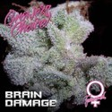 Brain Damage (Growers Choice) gefeminiseerd
