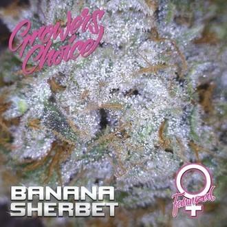 Banana Sherbet (Growers Choice) Feminized