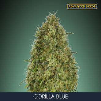 Gorilla Blue (Advanced Seeds) feminized