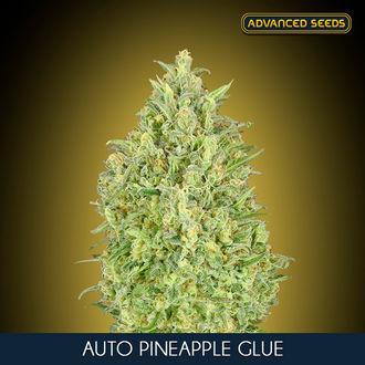 Auto Pineapple Glue (Advanced Seeds) feminized