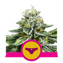 Sherbet Queen (Royal Queen Seeds) feminized