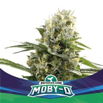 Moby-D XXL Auto (BSF Seeds) feminized