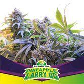 Pineapple Larry OG (BSF Seeds) feminized