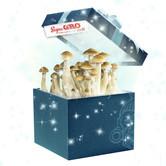Extreme XL Supa Gro Kit 100% (Zamnesia's Choice) 2100ml