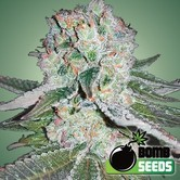 Banana Bomb (Bomb Seeds) feminized