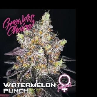 Watermelon Punch (Growers Choice) feminized