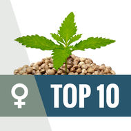 Top 10 Feminized Wietzaden