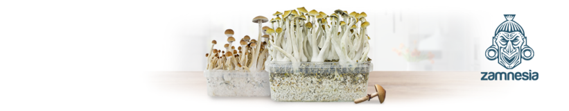Paddo Grow Kits Zamnesia