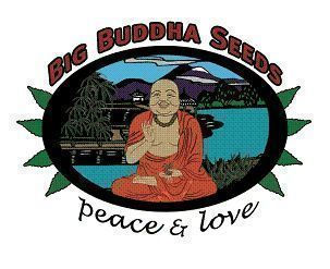 Big Buddha Seeds Logo