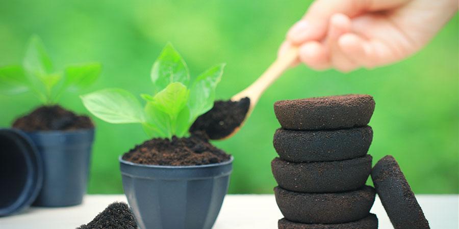 Het Voeden Van De Planten Met Koffie