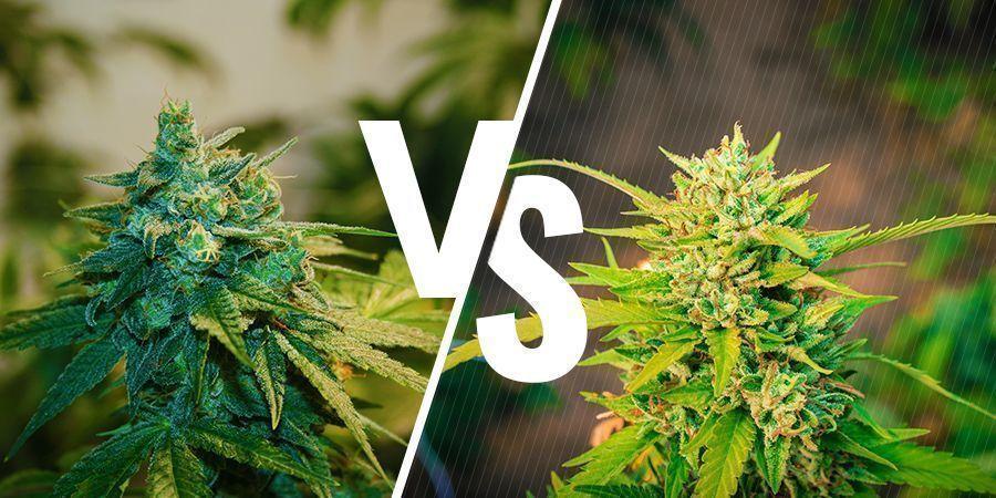 Binnen versus buiten gekweekte wiet: wat zijn de verschillen?