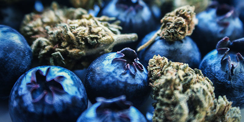 Blueberry: Flavour & Effects