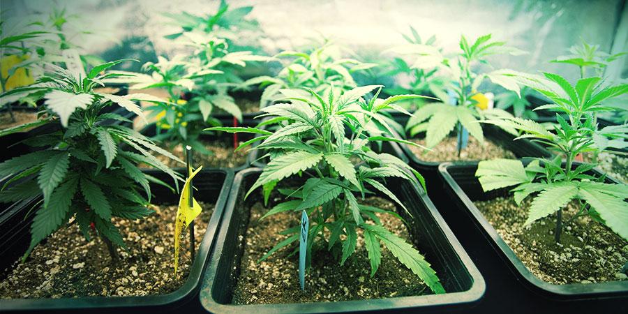 Het Selecteren Van De Juiste Potmaat Voor Je Planten