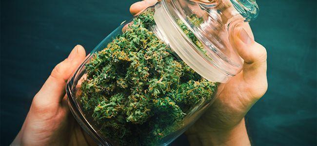 Cannabis Grinden: Shake It