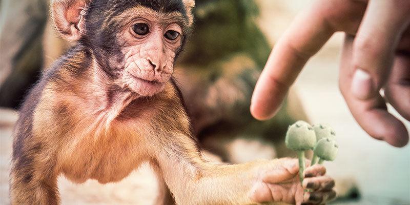 De stoned ape-theorie is misschien een verklaring voor onze evolutie