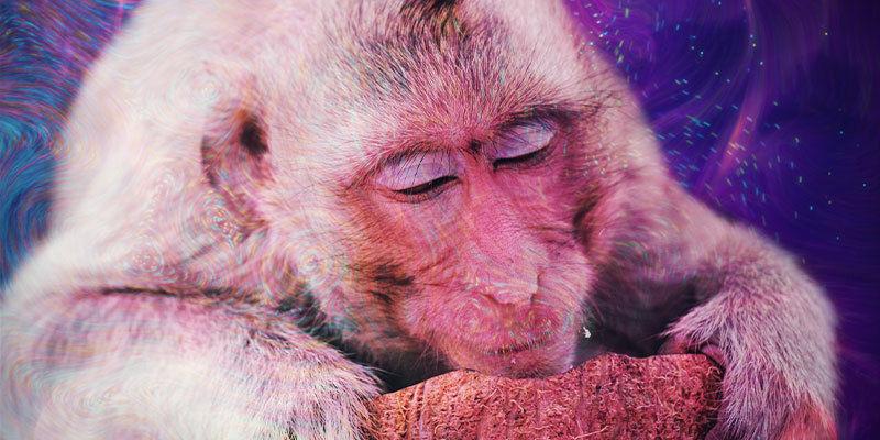 Wat is de stoned ape-theorie?