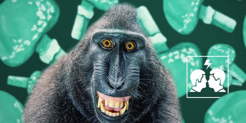 Waarom is de stoned ape-theorie controversieel?