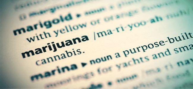Boeken Over Cannabis
