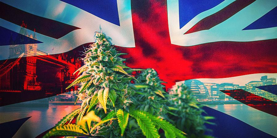 Hoe Kies Je De Beste Cannabis Strains UK