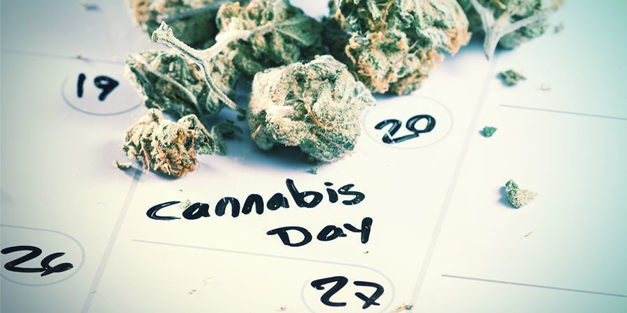 Wanneer Ontkiem Je Je Cannabiszaden?