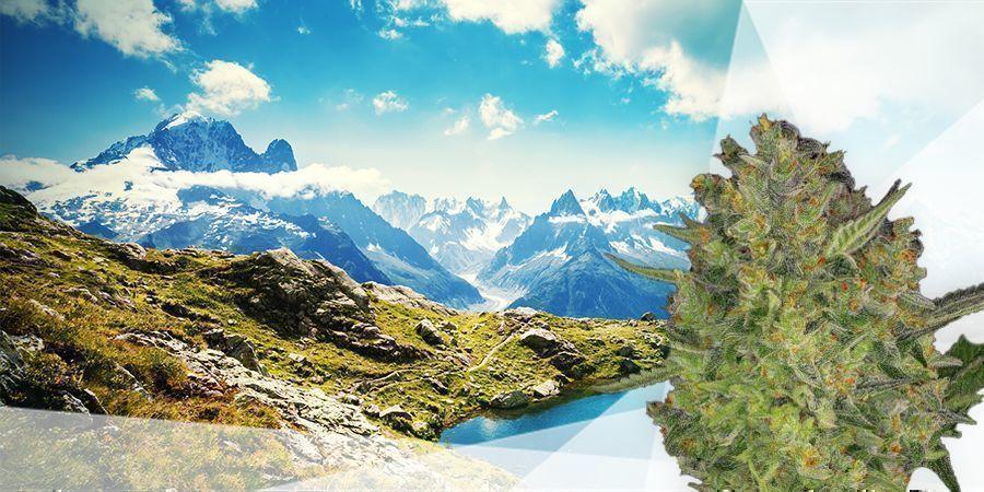 Semi-vasteland & De Berggebieden Frankrijk Cannabis