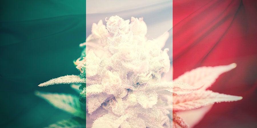 HOE KIES JE DE JUISTE CANNABIS STRAIN IN ITALIË?