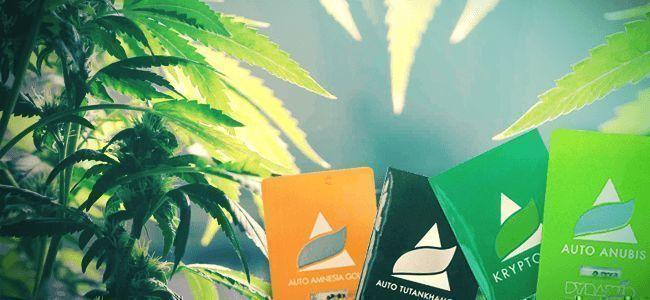 Pyramid Seeds: Unieke Cannabis Kruisingen