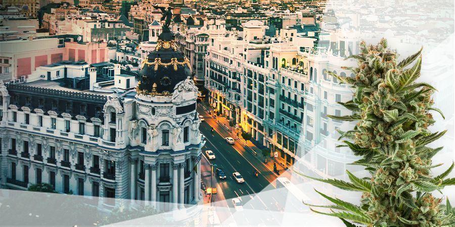 Cannabis Strains Centraal & Mediterraan Spanje