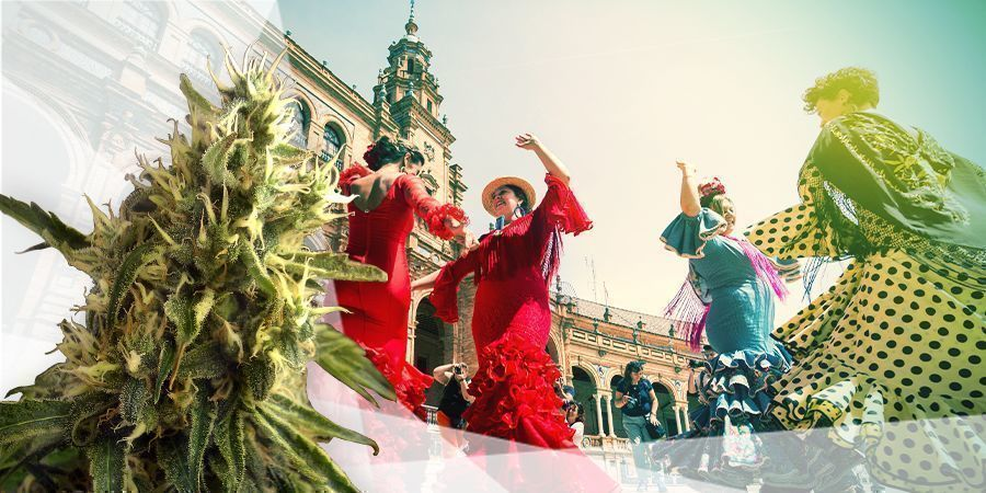 BEST CANNABIS STRAINS FOR THE SOUTH OF SPAIN