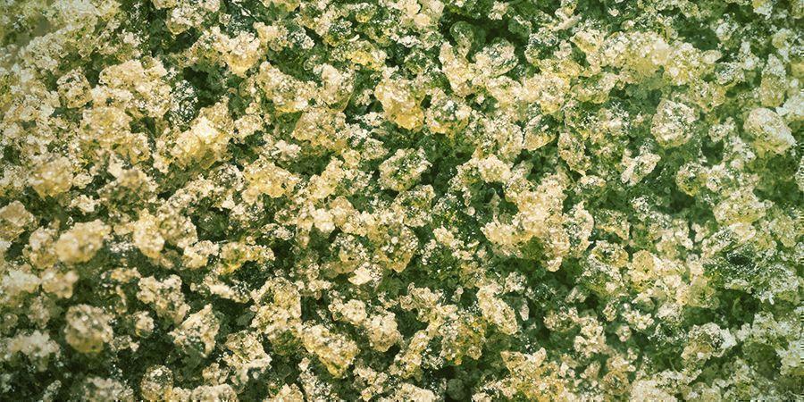 Cannabis Stengels: Bubble Hasj
