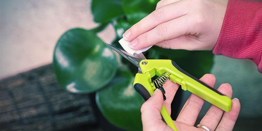 Tips voor het gebruik van een snoeischaar bij wietplanten: Zet de bladen in de olie