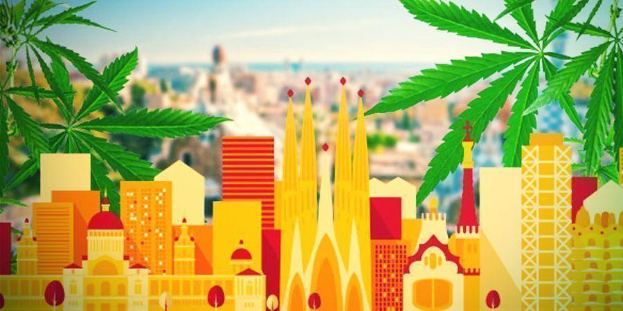 Op Jacht Naar De Beste Cannabis Van Het Land