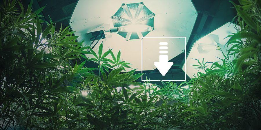 Cannabis: Verminder Het Aantal Lichturen Per Dag
