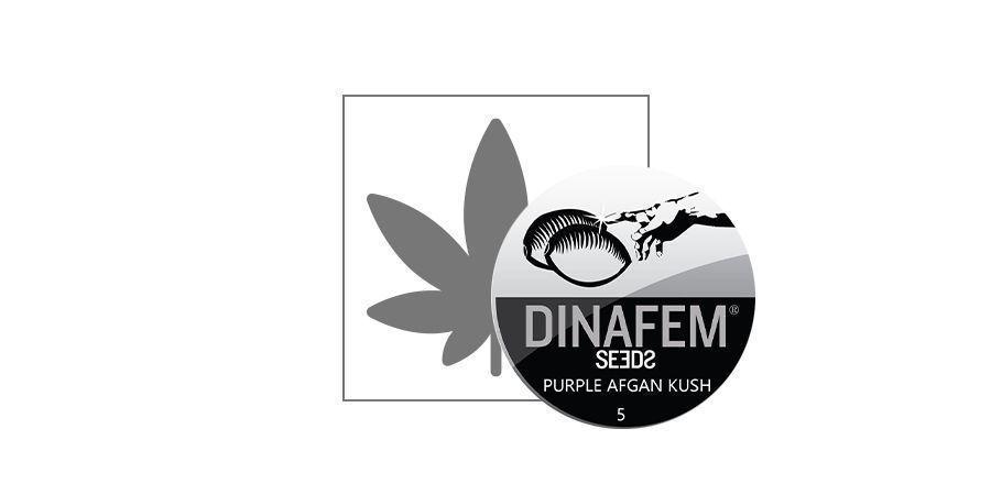 Purple Afghan Kush (Dinafem)