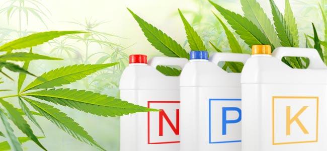 Cannabis Voedingsstoffen