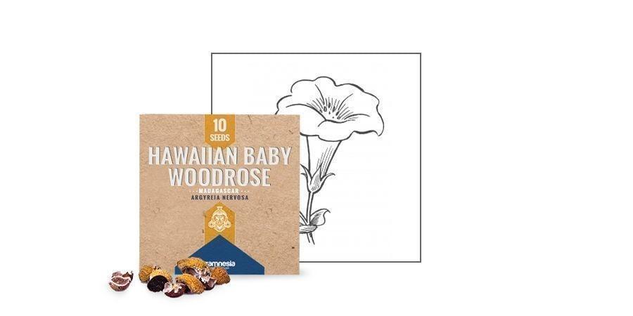 HAWAIIAN BABY WOODROSE-ZADEN