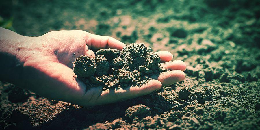 Klimaat En Medium Tabacco Seeds