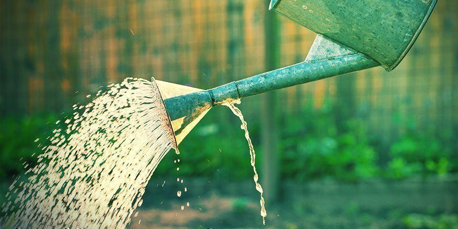 Geef De Juiste Meststoffen En Hoeveelheden Water