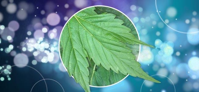 Anders Gevormde Cannabisplanten