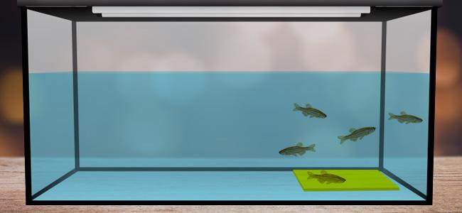 Zwemmen boven het gele platform