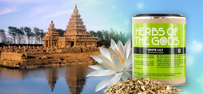 Herbs Of The Gods Witte Lotus