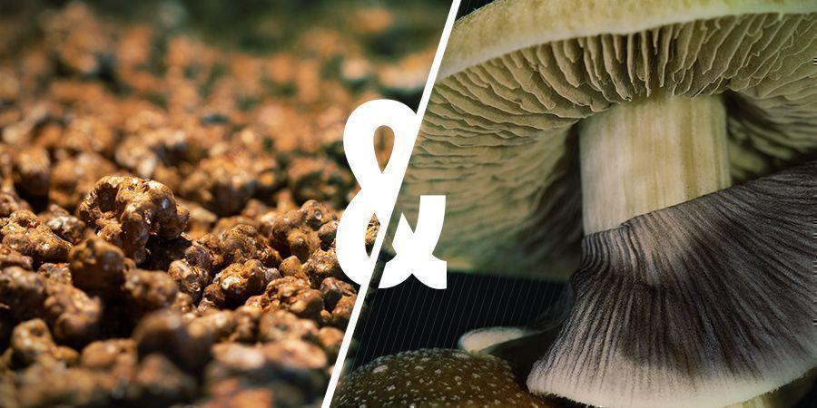 Magic Mushrooms Vs Magic Truffles: Wat zijn de overeenkomsten?
