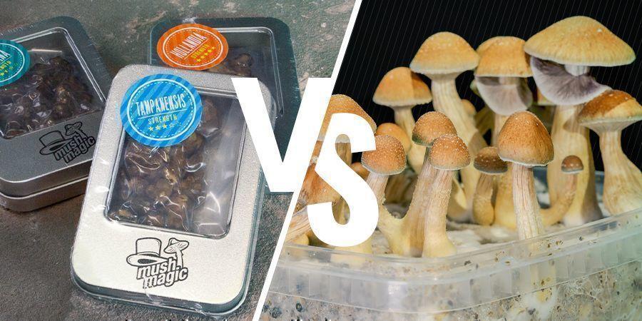 Het Verschil Tussen Magic Truffles En Magic Mushrooms