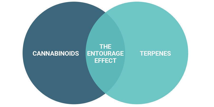 Word je high van het entourage effect?