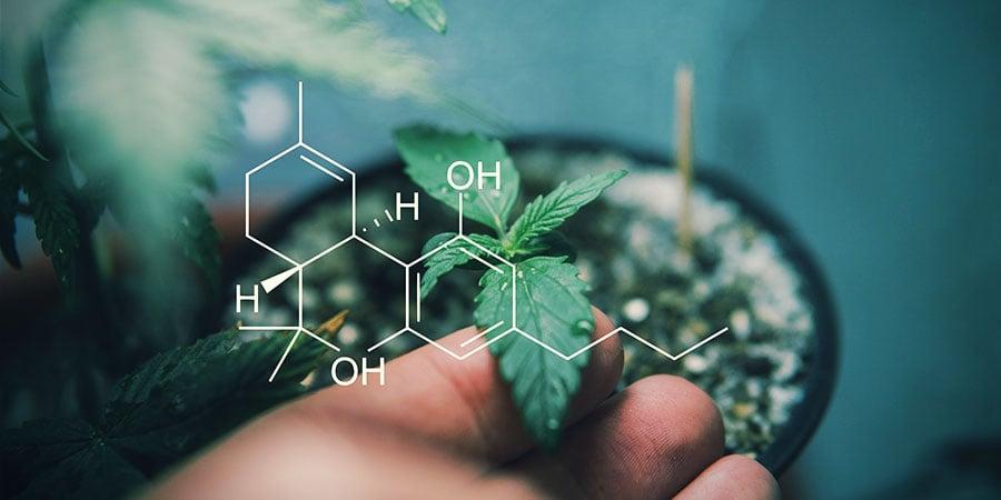 Meer Over Cannabinoïden