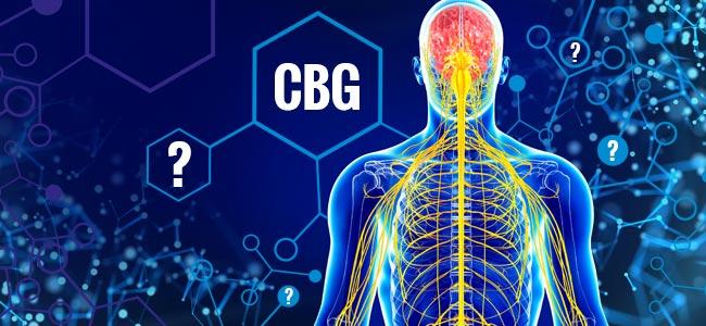 Wat Zijn De Effecten Van CBG?
